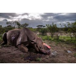 Brent Stirton, Memorial to a species; © Brent Stirton