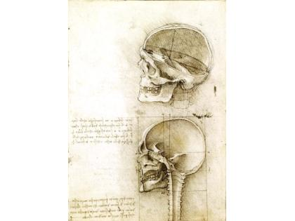 Cultura Italia Leonardo Da Vinci The Art Of Anatomy